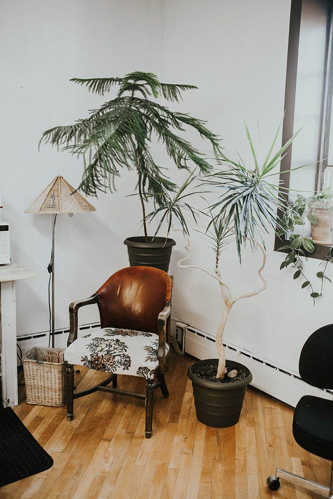 Chair, Furniture, Indoors, Interior Design, Living Room, Room, Home Decor, Wood, Plant, Hardwood, Table